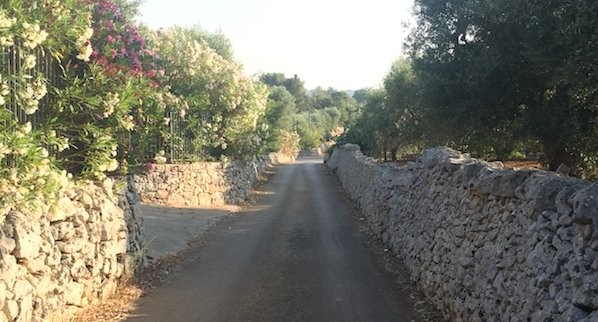 Dirt Road Surrounded by Stone Wall and Trees